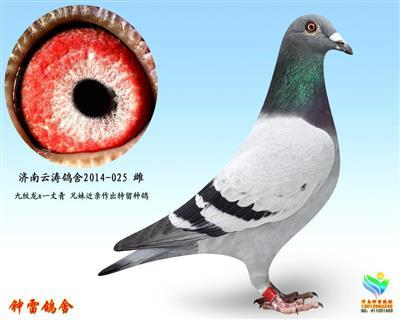 云涛鸽舍025