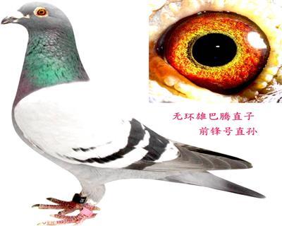 巴腾直子(前锋号直孙)