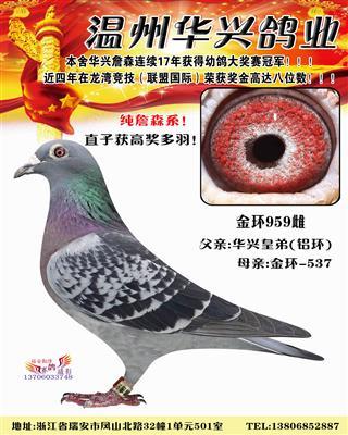 华兴金环959