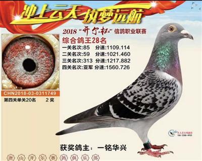 2018唐山开尔鸽王28名