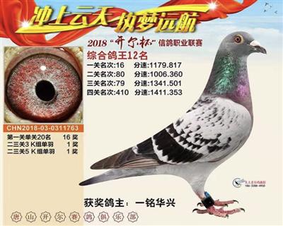 2018唐山开尔综合鸽王12名
