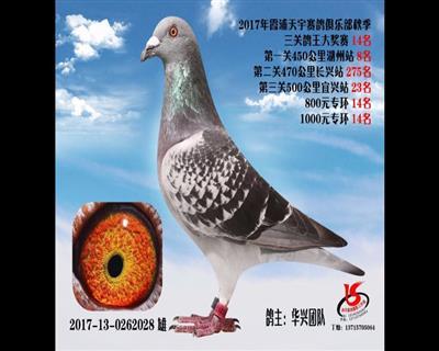 2017霞浦天宇秋赛三关鸽王14名