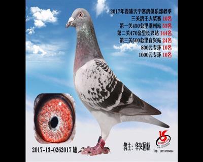 2017霞浦天宇秋赛三关鸽王10名