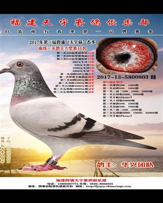 2017霞浦天宇春赛三关鸽王10名