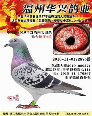 2016龙湾南北四关综合鸽王7名