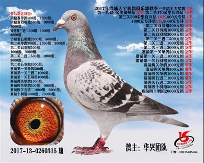 2017秋季霞浦天宇三关鸽王5名