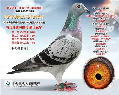 2018秋季唐山阳光四关鸽王总冠军