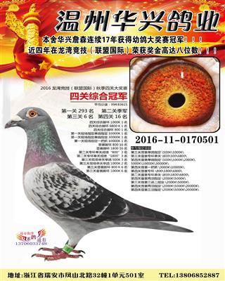 2016年龙湾竞技四关综合鸽王总冠军
