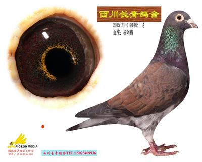 西川长青鸽舍