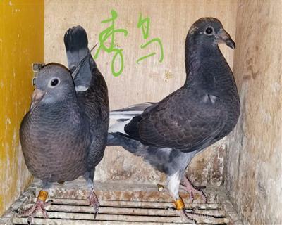 2019李鸟