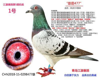 2019年第5期拍卖1号鸽