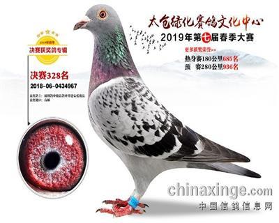 太仓绿化赛鸽文化中心春季大赛决赛328名