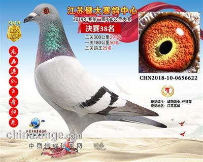 江苏健大赛鸽中心春第二届决赛38名
