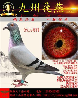 【鸽王总冠军】