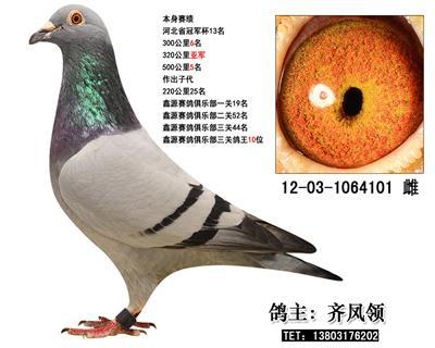 中国贝罗佛101