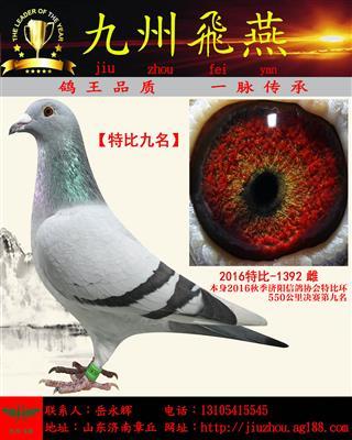 【双关九名】