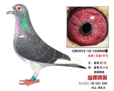 吴淞李鸟1