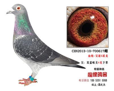超远程老国血吴淞42