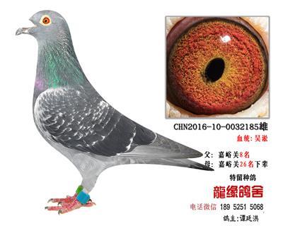 超远程老国血吴淞2