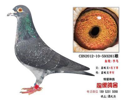 ��缘李鸟3
