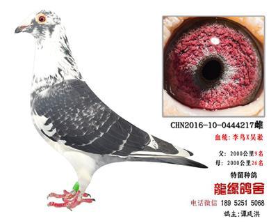 李鸟吴淞1