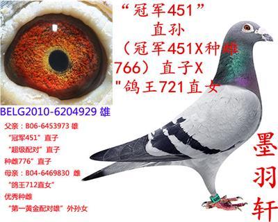 """凡""""冠军451直子 X 鸽王712直女"""""""