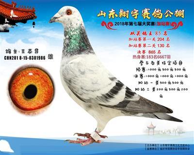 山东鲁阳鸽业