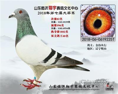 山东临沂翔宇赛鸽第七届大奖赛决赛82名