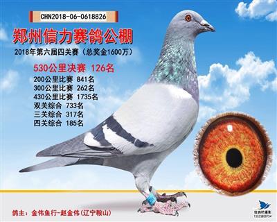 郑州信力赛鸽公棚第六届决赛126名