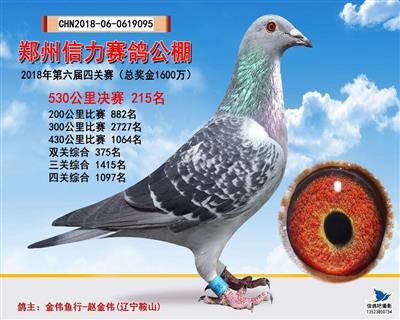郑州信力赛鸽公棚第六届决赛215名