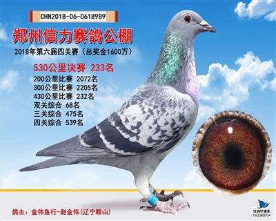 郑州信力赛鸽公棚第六届决赛233名