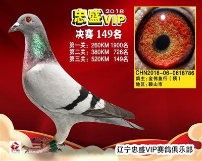 辽宁忠盛VIP赛鸽俱乐部决赛149名