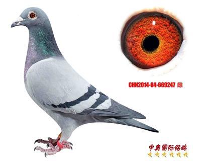 CHN2014-04-669247