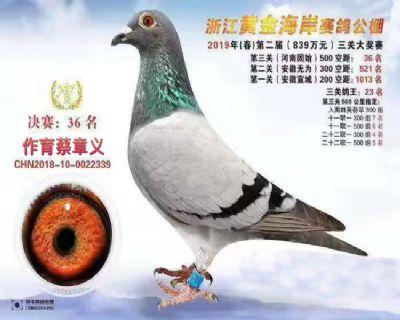 2019浙江黄金海岸决赛36名,指定5项