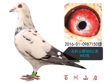 2016010987150