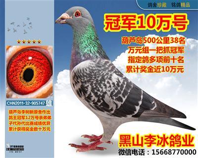 鸽王冠军12万亲弟弟