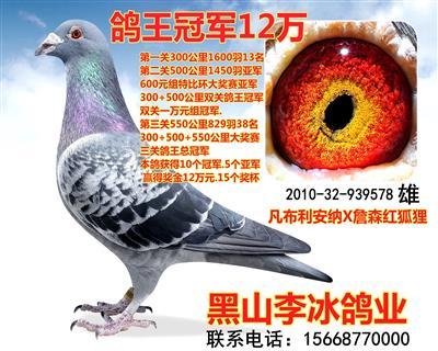 鸽王冠军12万
