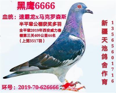 黑鹰6666