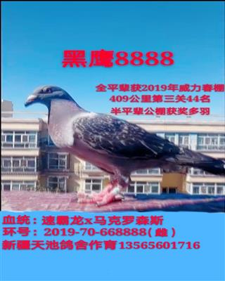 黑鹰8888
