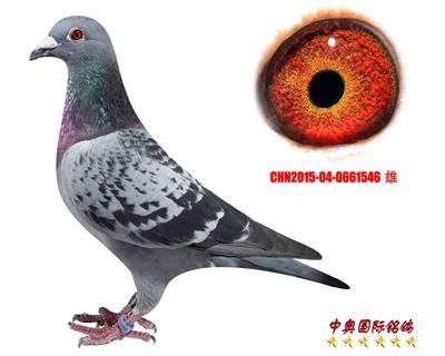 CHN2015-04-0661546