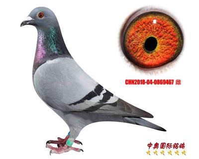 CHN2018-04-0869460
