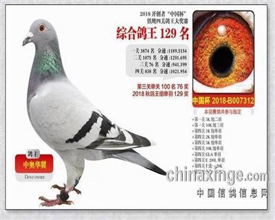 18年北京开创者寄养棚四关鸽王129名