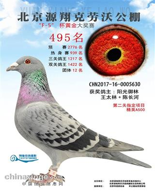 17年北京克劳沃F-5杯黄金大奖赛495