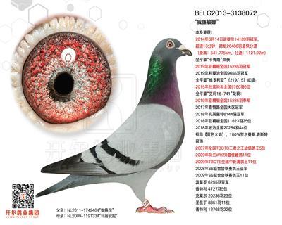 【威廉敏娜】14年波提尔14109羽冠军