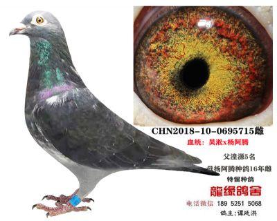 吴淞杨阿腾4