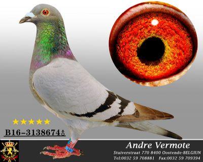 安德烈勃默德B16-3138674
