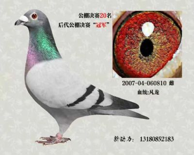 冠军源泉本身公棚决赛20名