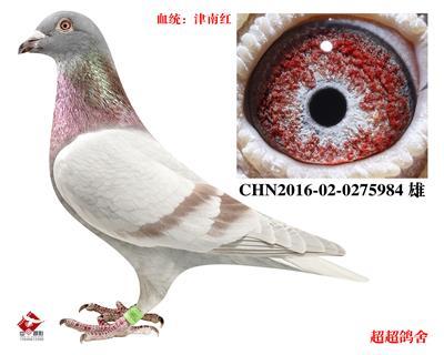 超超CHN2016-02-0275984