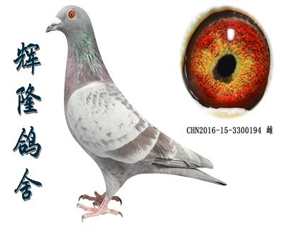 辉隆149