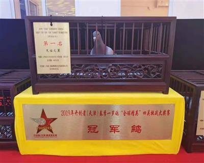 2019天津开创总冠军